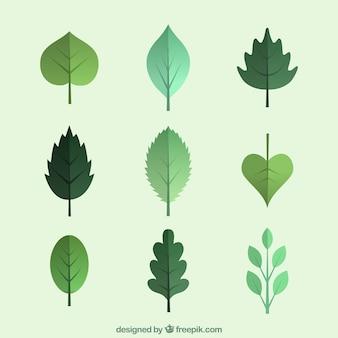 Folhas verdes da coleção