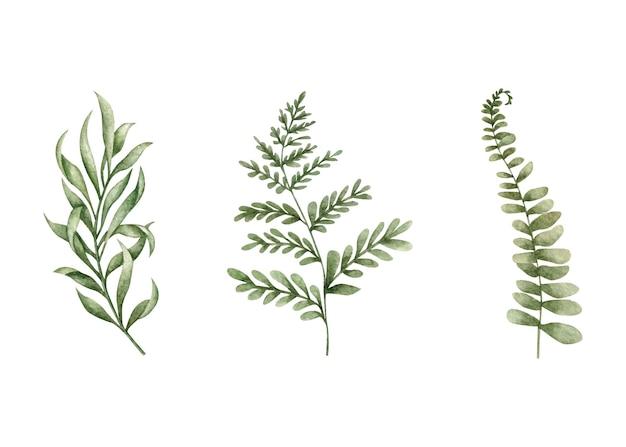 Folhas verdes definidas para design de cartão comemorativo