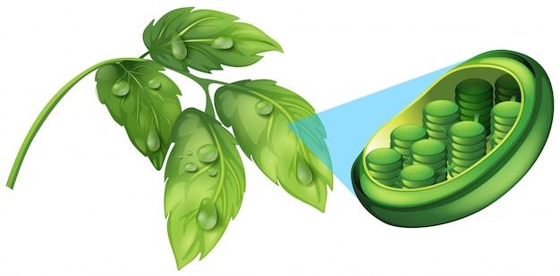 Folhas verdes e diagrama de planta celular