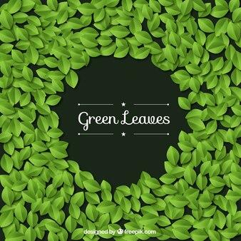 Folhas verdes fundo