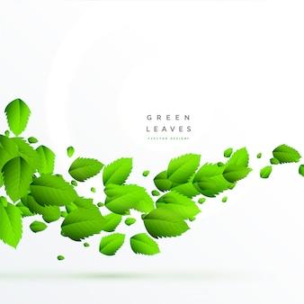 Folhas verdes isoladas flutuando fundo