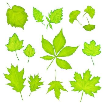 Folhas verdes isoladas