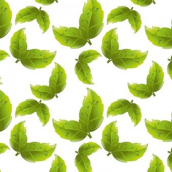 Folhas verdes ou folhas