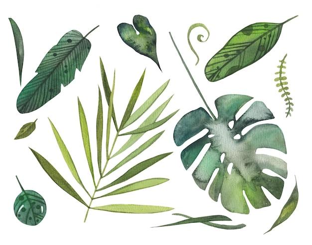 Folhas verdes tropicais desenhadas à mão em aquarela com monstera. grama, samambaia.