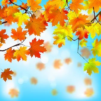 Folhas vermelhas e amarelas, conceito de outono