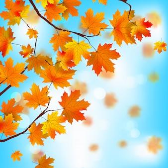 Folhas vermelhas e amarelas contra o céu azul.