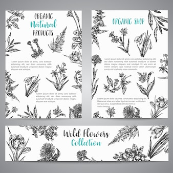 Folheto de ervas e flores silvestres de mão desenhada coleção vintage de ilustrações de plantas no estilo de ...