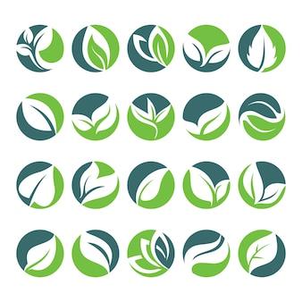 Fólio verde da folha no ícone da forma do círculo
