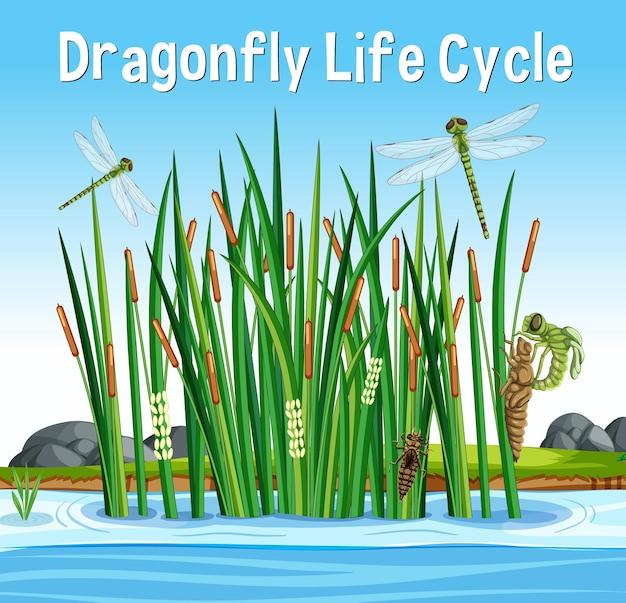 Fonte do ciclo de vida da libélula em cena de pântano