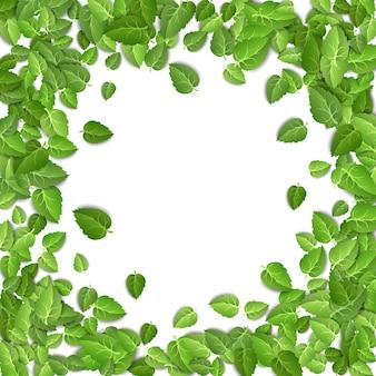 Forma de círculo de folhas de chá verde isolada no fundo branco