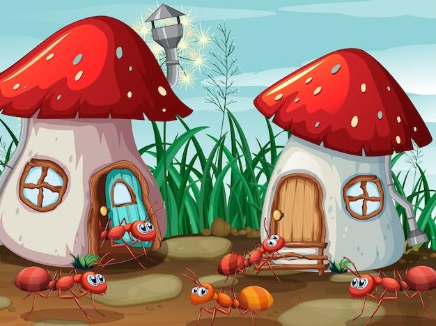 Formigas na casa de cogumelo