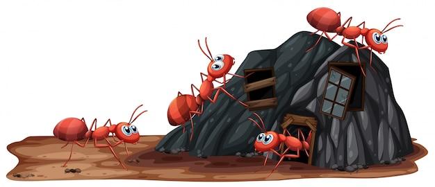Formigas trabalhadoras em fundo branco