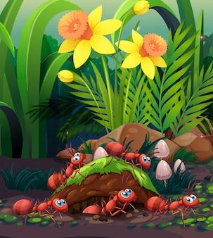 Formigas trabalhando no ninho