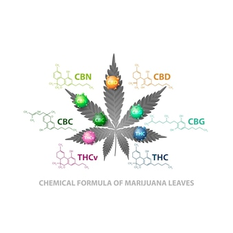 Fórmulas químicas de canabinóides naturais. folha de cannabis com moléculas 3d