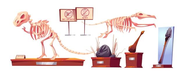 Fósseis de dinossauros em museu de história