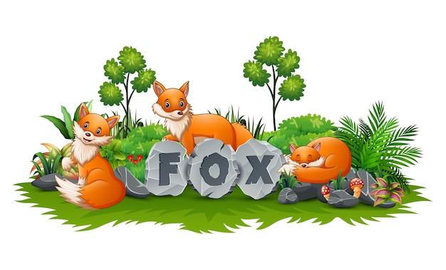 Fox estão brincando no jardim