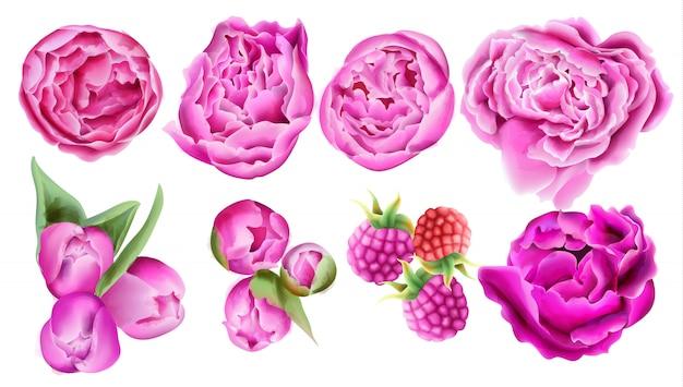 Framboesa aquarela, rosas cor de rosa brilhantes e flores tulipa com folhas verdes