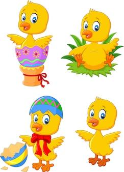 Frango de bebê fofo engraçado com conjunto de coleta de ovo de páscoa