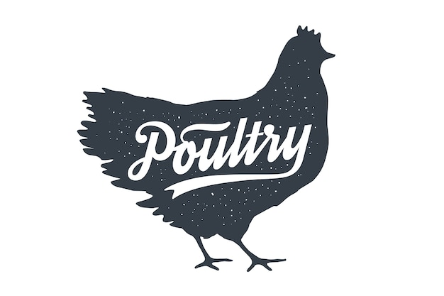Frango, galinha, aves. letras. letras vintage, silhueta de galinha galinha com texto de letras aves domésticas.