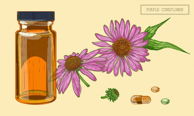 Frasco e flores de echinacea médica