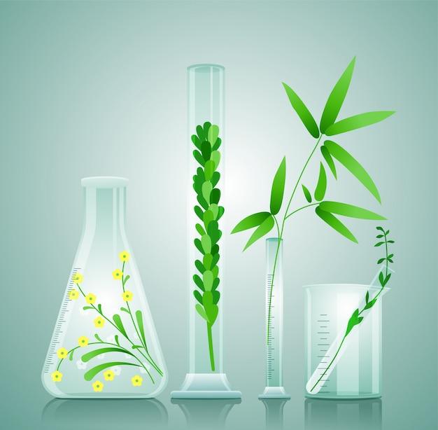 Frascos médicos de vidro com plantas medicinais
