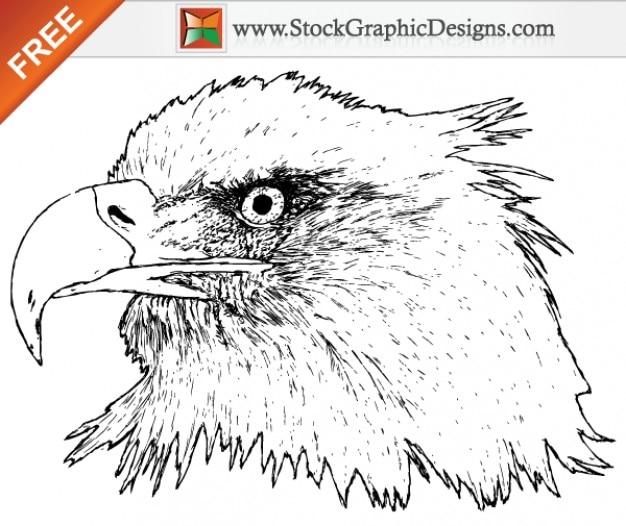 Free hand drawn águia vector graphics