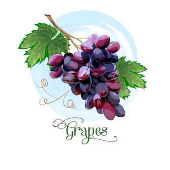 Fresco, cacho uvas, roxo