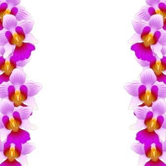 Fronteira da orquídea vanda miss joaquim