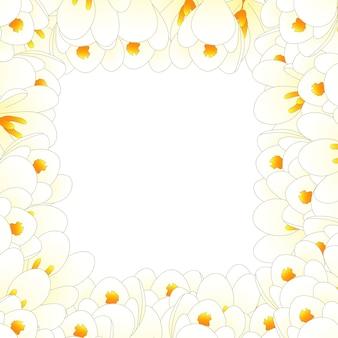 Fronteira de flor de açafrão branco