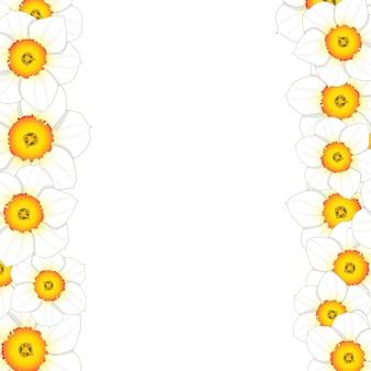 Fronteira de flor de narciso