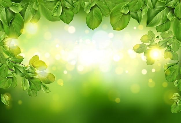 Fronteira de folhas de árvore no fundo desfocado abstrato verde