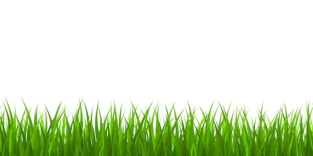 Fronteira de grama verde fresca
