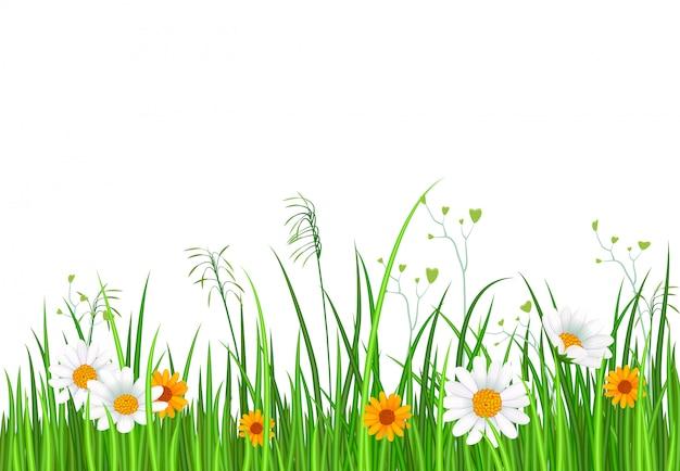 Fronteira de natureza verde com fundo de grama e flor