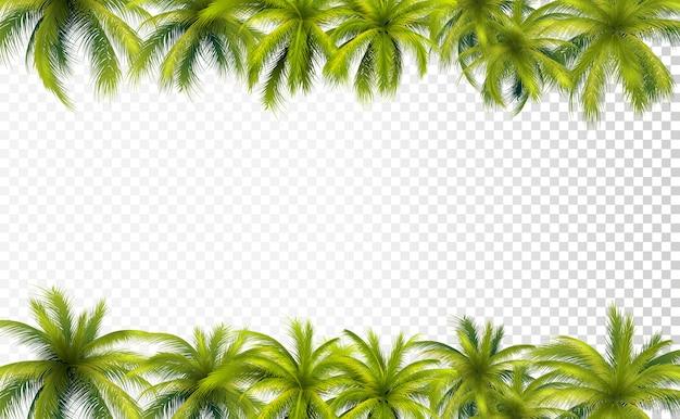 Fronteiras de folhas de palmeira