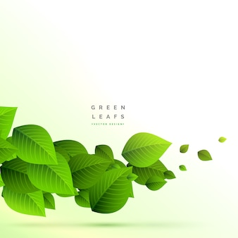 Frsh verde folhas ramo crescendo fundo