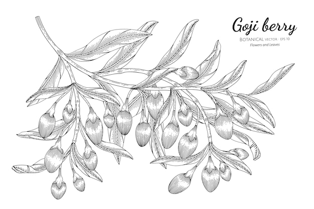 Fruta de goji desenhada à mão ilustração botânica
