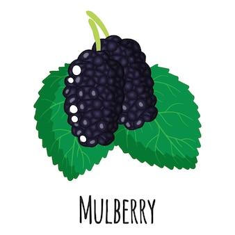 Fruta de superalimento de amoreira para design, rótulo e embalagem de mercado de fazendeiro de modelo. alimentos orgânicos de proteína de energia natural. ilustração isolada dos desenhos animados do vetor.