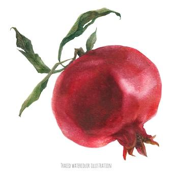 Fruta grande e romã fresca