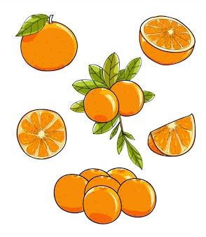 Fruta laranja vector mão ilustrações desenhadas