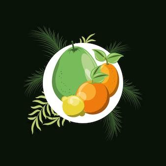 Frutas cítricas sobre o círculo branco com folhas tropicais