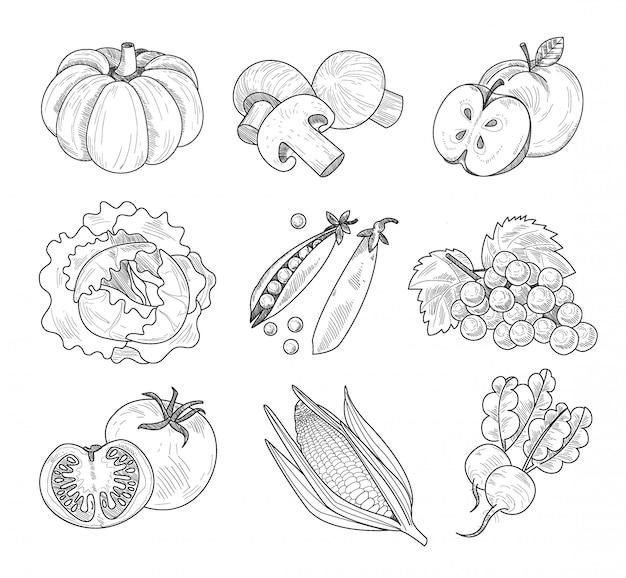 Frutas e legumes, ilustração handdrawn