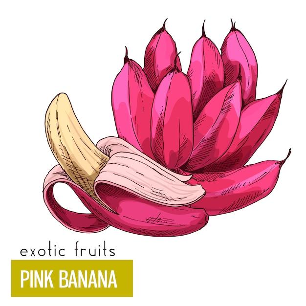 Frutas exóticas com ilustração de bananas rosa