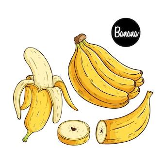 Frutas frescas de banana com estilo de desenho colorido