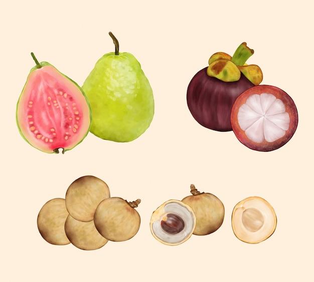 Frutas tropicais. goiaba, longan, mangostão