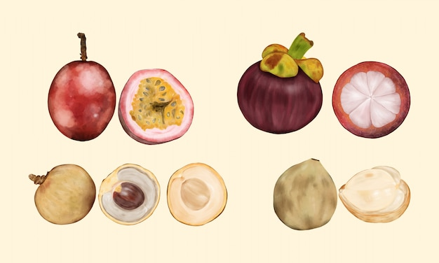 Frutas tropicais. mangustão, longan, langsat, maracujá