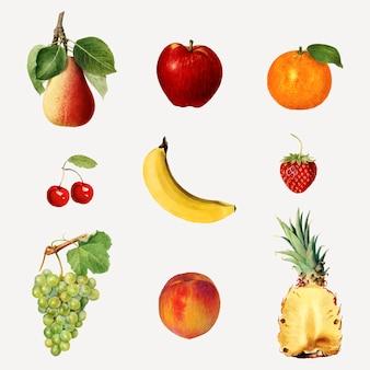 Frutas tropicais mistas desenhadas à mão