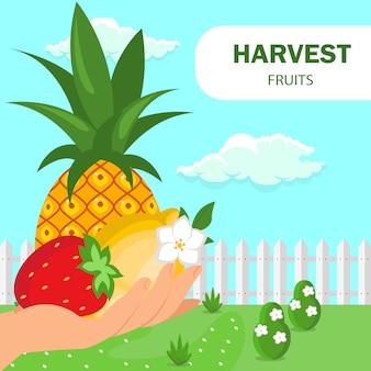 Frutas verão colheita poster plano vector template