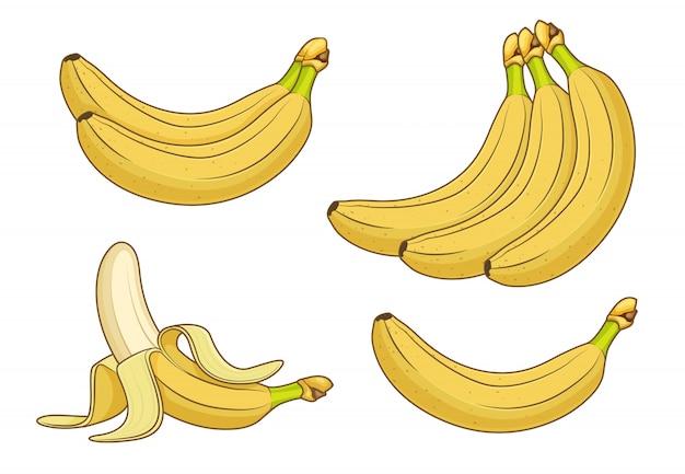 Frutos de banana dos desenhos animados. cachos de ilustração de bananas frescas