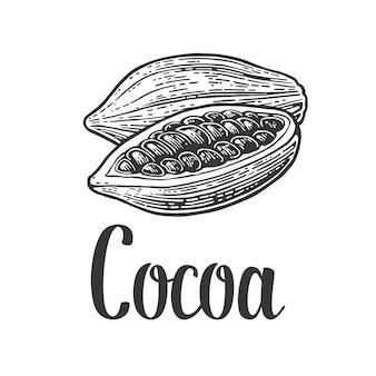 Frutos de grãos de cacau, gravura ilustração