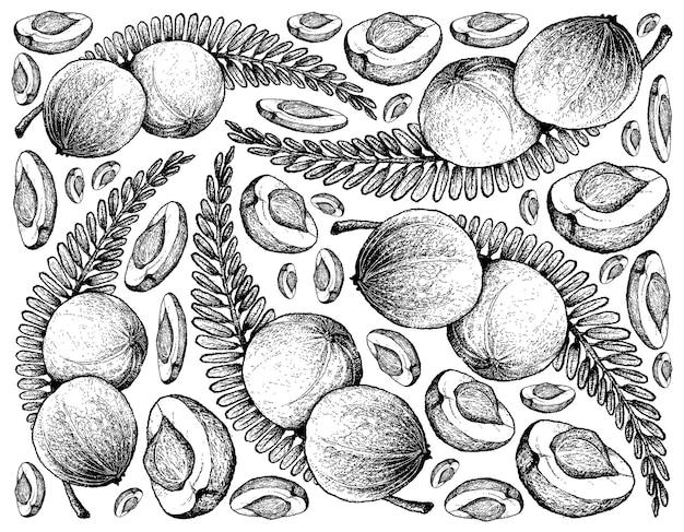 Frutos de groselha indiana desenhada à mão